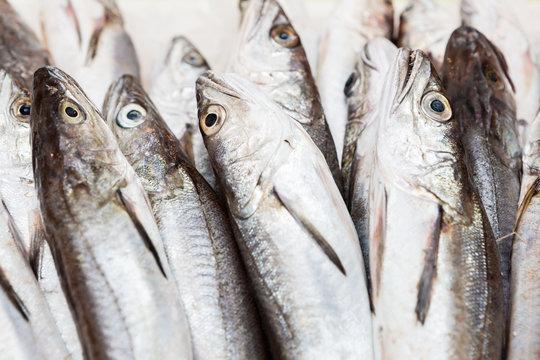 Hake fishes at fish market
