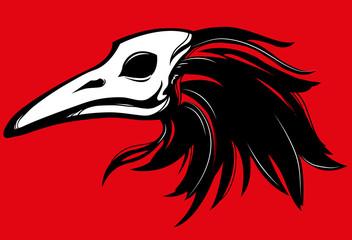 raven skull beak