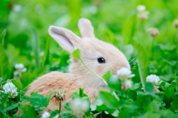 Little rabbiti on green grass