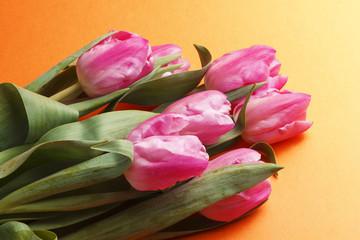 tulip on orange background