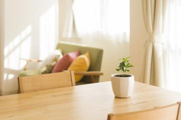 テーブルの上にある観葉植物