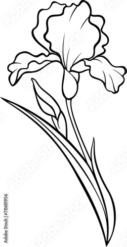 Line Drawing Of Iris Flower : Iris flower drawing tattoo pixshark images