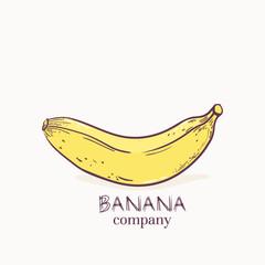 Vector illustration of banana logo template