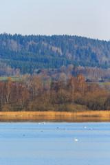 Lake view at spring