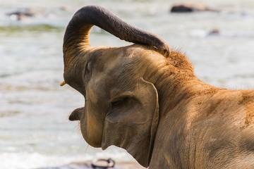 wrinkles of an elephant