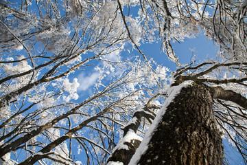 Scorci di cielo attraverso rami ghiacciati
