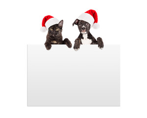 Fototapete - Christmas Puppy and Kitten Hanging Over Sign