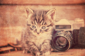 Kitten with vintage photo camera, vintage image