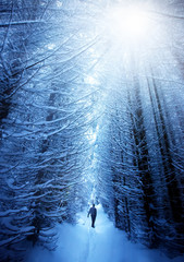 man in snow forest