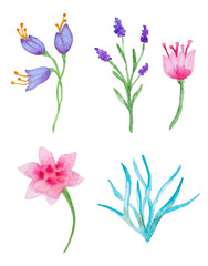 Watercolor floral elements for design