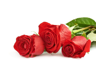 Three red roses isolated