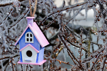 Birdhouse hanging on ice covered tree branches after ice storm