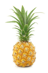 fresh mini pineapple fruit on a white background