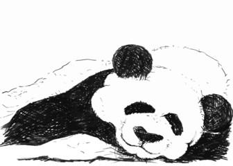 cute panda painting on white background
