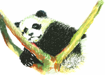 cute panda painting on white background
