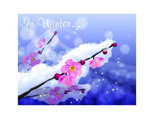 겨울이미지