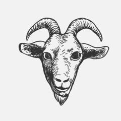 Goat Face, doodle illustration