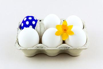 Blaues Osterei mit Narzisse im Eierkarton