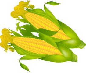 노란 옥수수