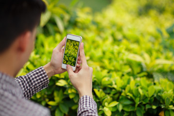Taking photo of grass
