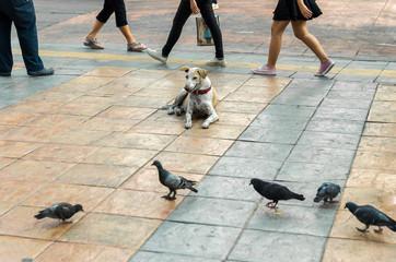 野良犬と人々
