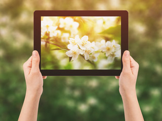 female teen hand hold tablet pc against flowers
