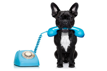 dog telephone phone