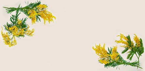 Mimose wallpaper vintage