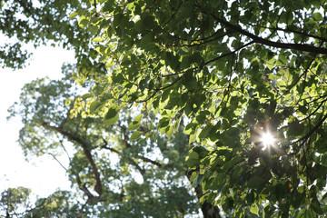 초록 풀잎