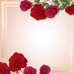 Romantic rose background