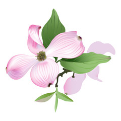 Dogwood - pink