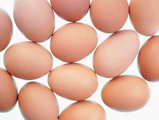 달걀 컨셉포토