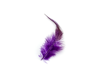 Purple feather on white background.