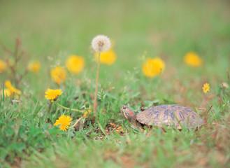 거북이와 꽃밭