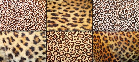 collection of leopard pelt textures