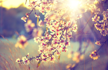 Beautiful nature scene with blooming tree and sun flare Fototapete