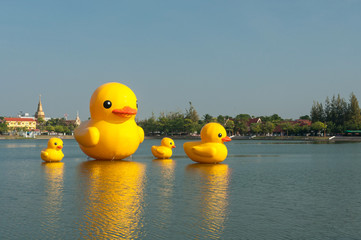 Family yellow duck at the lake