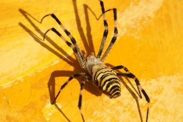 거미이미지