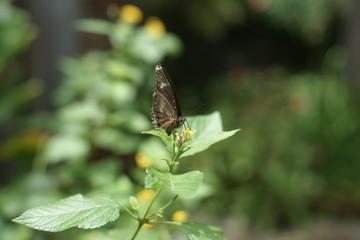 나비이미지