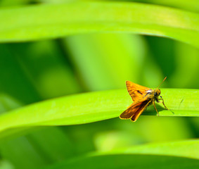 Butterfly on green leaf macro shot