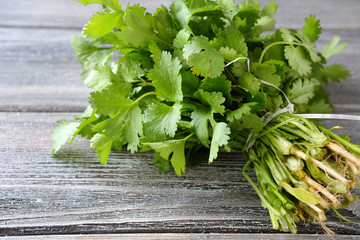 Green cilantro on a wooden boards