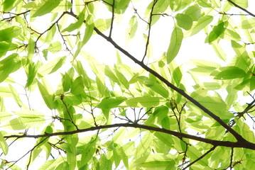 나뭇가지이미지