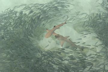 물고기이미지