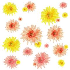 Watercolor  vector gerbera flowers