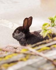 Black rabbit in the park