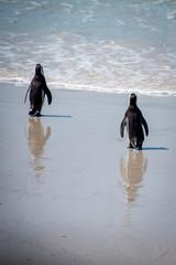 Walking Penguins