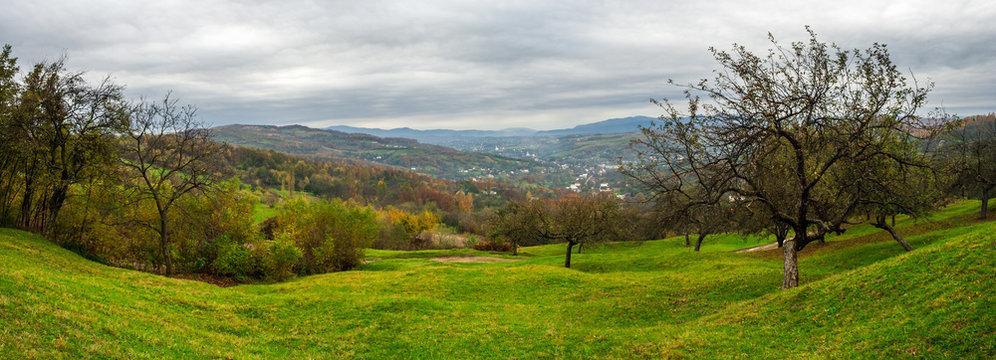 panorama of apple orchard on hillside