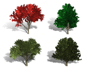 rendering of four different kind of trees