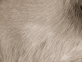 dog fur (12)
