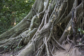 plants in Laos